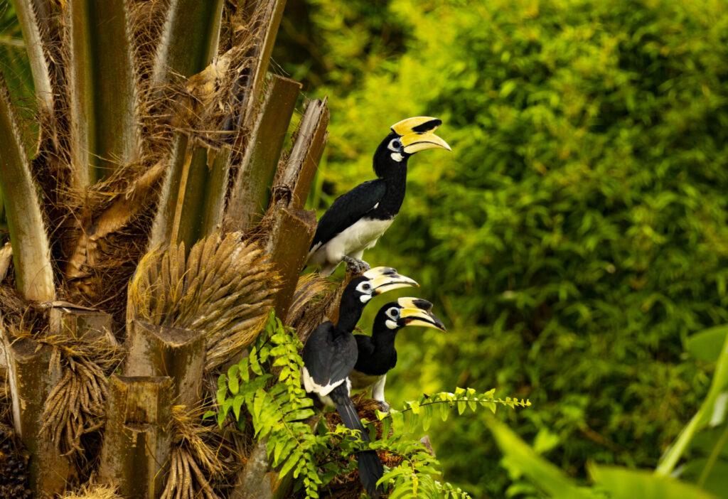 นกเงือก Koh Yao เที่ยวเกาะยาวน้อย