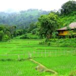hmong hilltribe lodge resort MAerim mon-jam ม้ง รีสอร์ท เเม่ริม เชียงใหม่